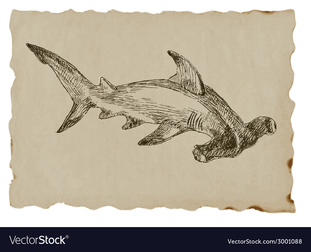 Hammerhead shark vector | Price: 1 Credit (USD $1)