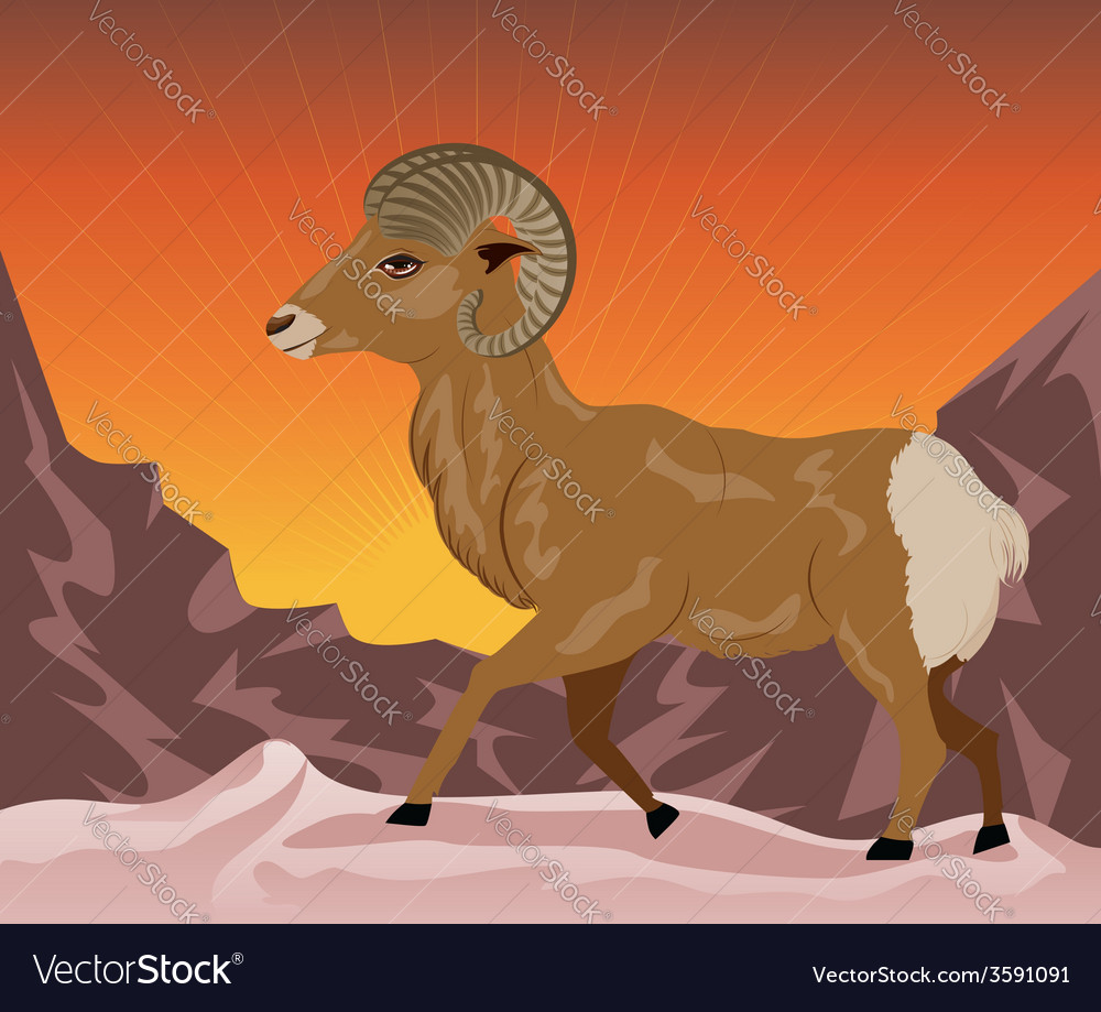 Wild ram in the mountains vector | Price: 1 Credit (USD $1)
