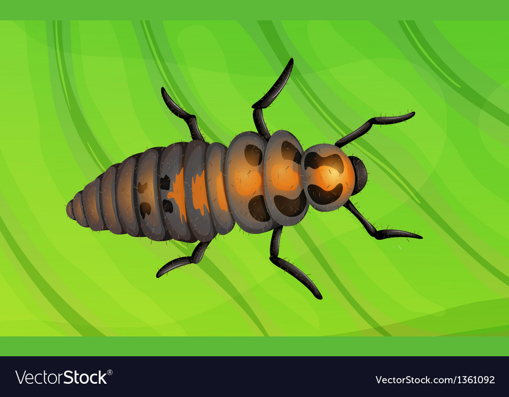 Ladybug life cycle vector | Price: 1 Credit (USD $1)