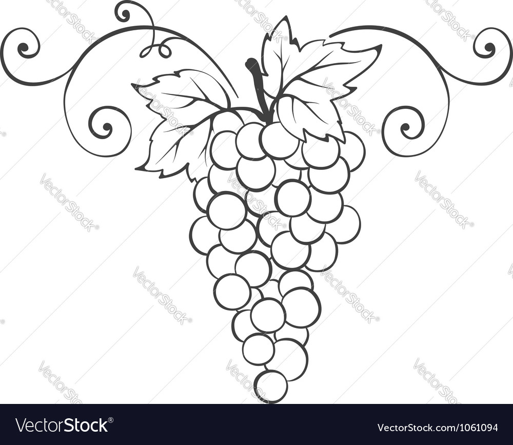 Grape - decorative element vector | Price: 1 Credit (USD $1)