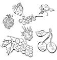 Sketch of fruit vector