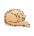Red fluffy cat vector