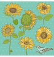 Flower set detailed hand drawn sunflowers vector