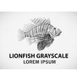 Lionfish vector