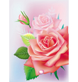 Greeting card with roses vector