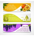 Mixed fruits banners collection vector