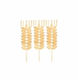 Watercolor ear of wheat on the white background vector