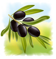 A branch of black olives vector