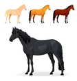 Set of realistic horse with different coats vector