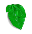 Green leaves bunch with waterdrops vector