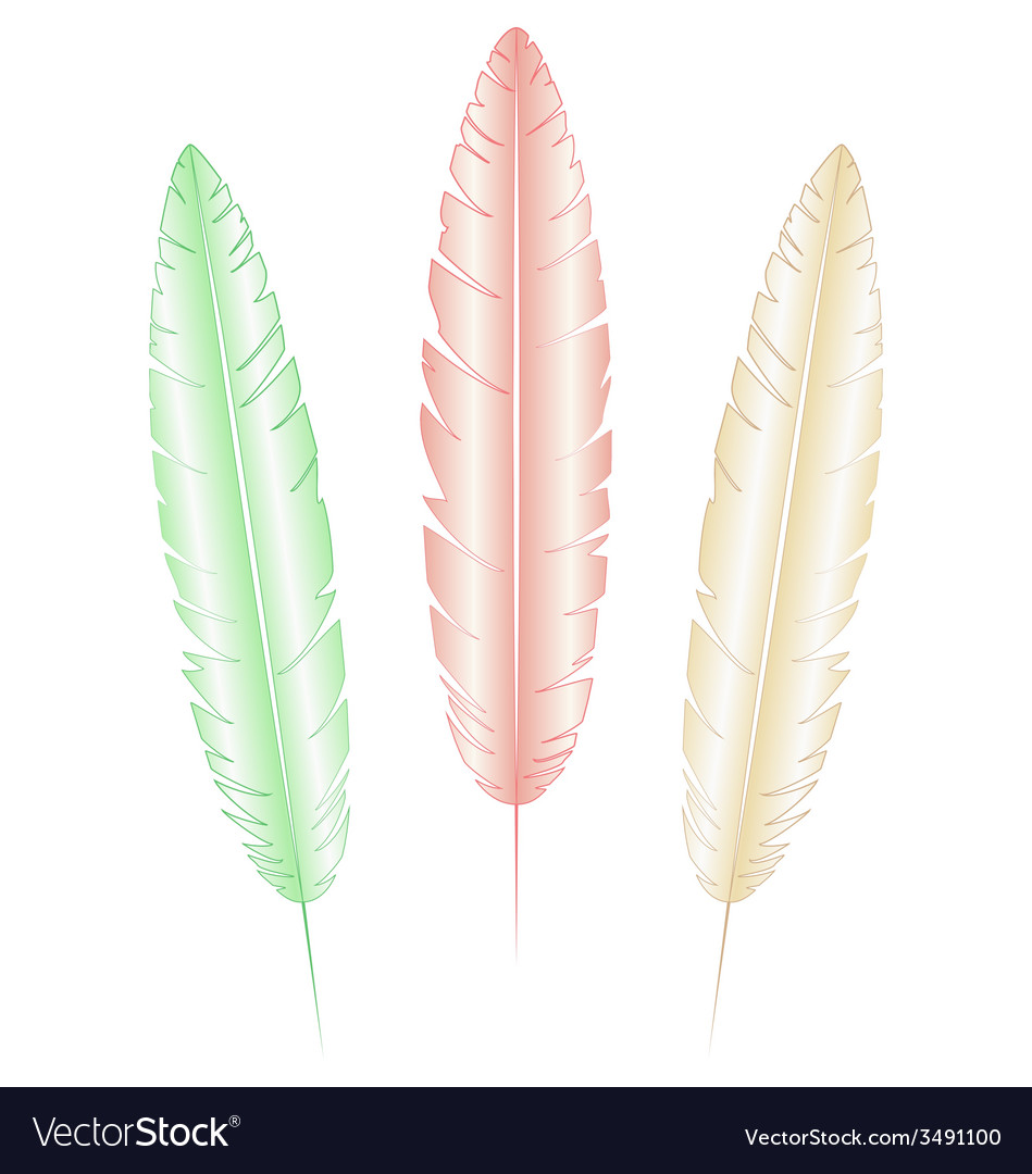Light feathers on white vector   Price: 1 Credit (USD $1)
