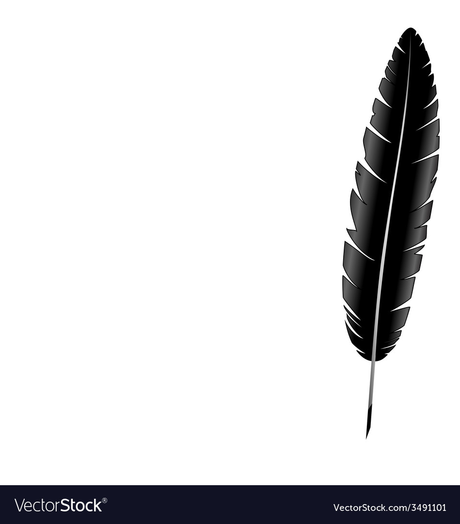 Feather isolated on white vector | Price: 1 Credit (USD $1)