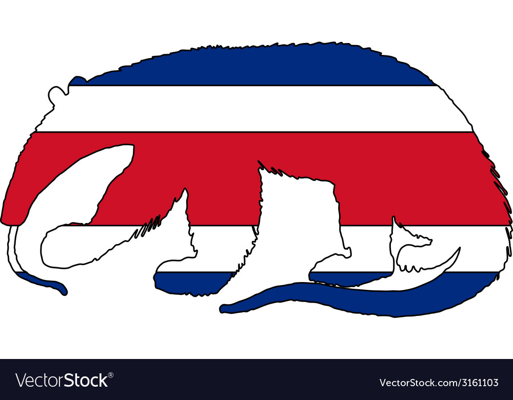 Anteater costa rica vector | Price: 1 Credit (USD $1)