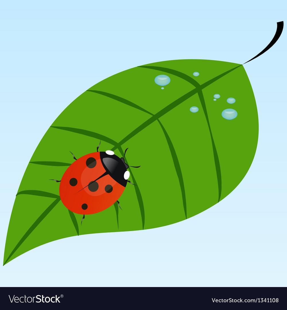 Ladybug on a leaf vector   Price: 1 Credit (USD $1)