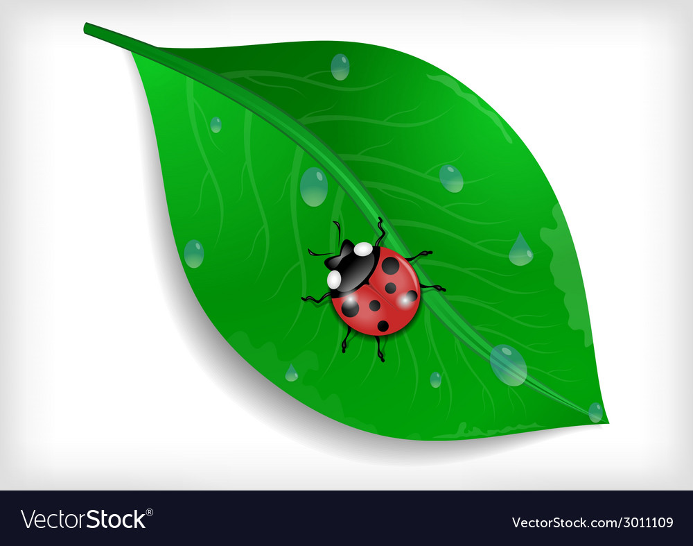 Green leaf and ladybird vector | Price: 1 Credit (USD $1)