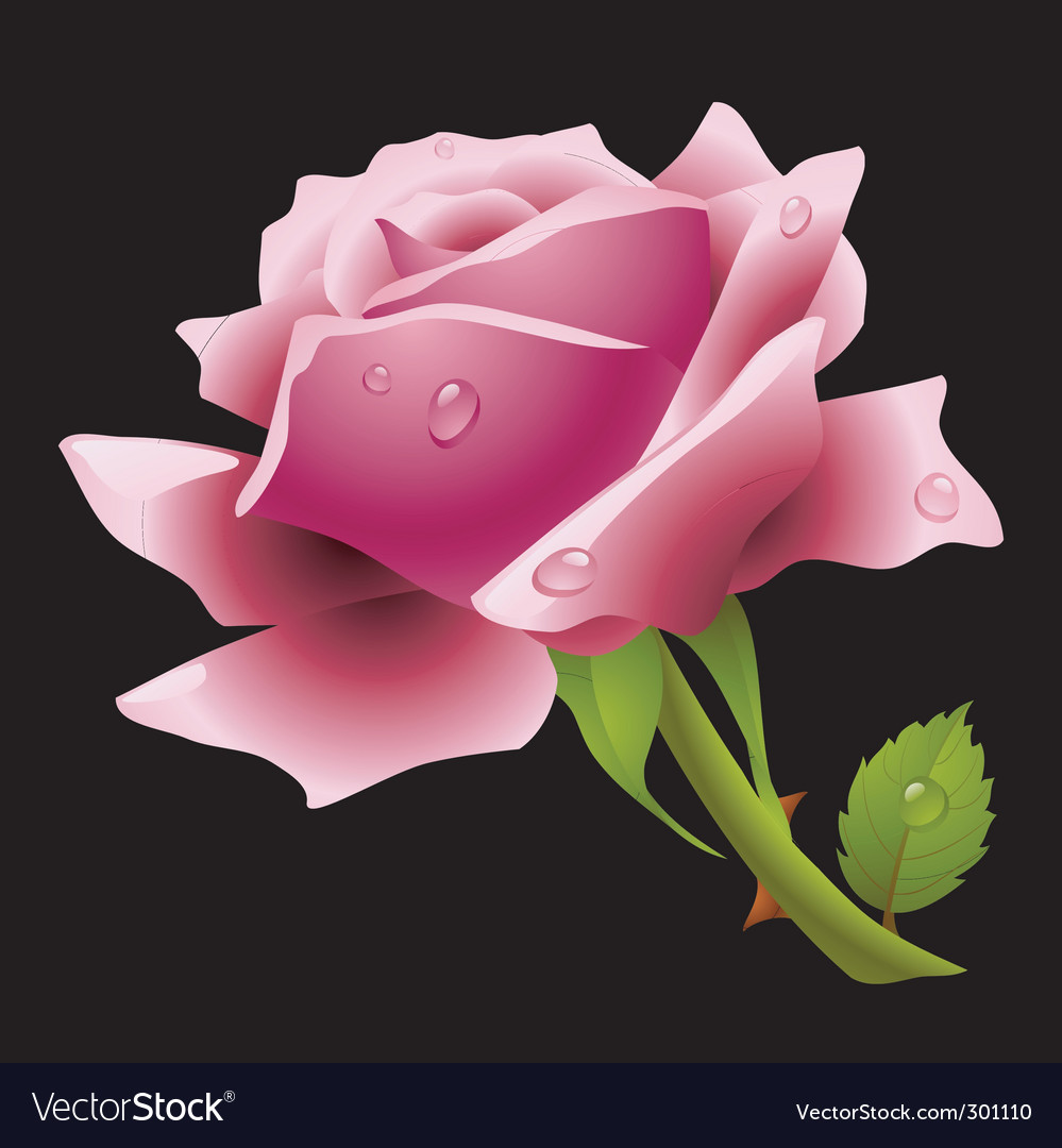 Pink rose vector | Price: 3 Credit (USD $3)