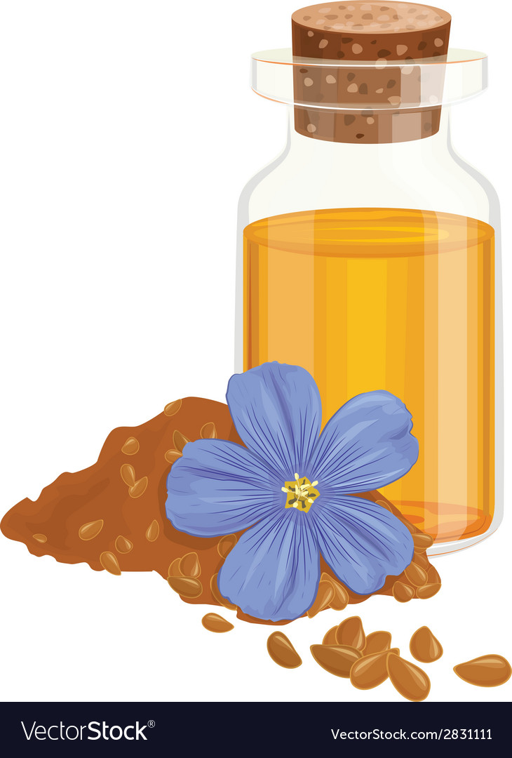 Flax oil seeds and flower vector | Price: 1 Credit (USD $1)