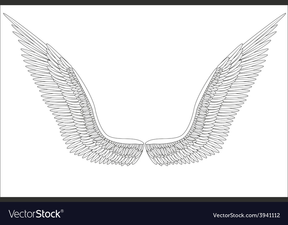 Sketch open angel wings vector | Price: 1 Credit (USD $1)