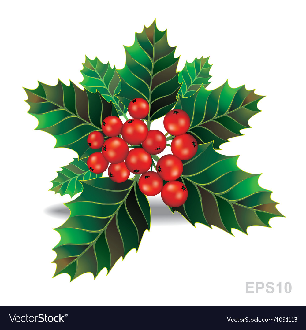 Beautiful holly christmas branch vector | Price: 1 Credit (USD $1)