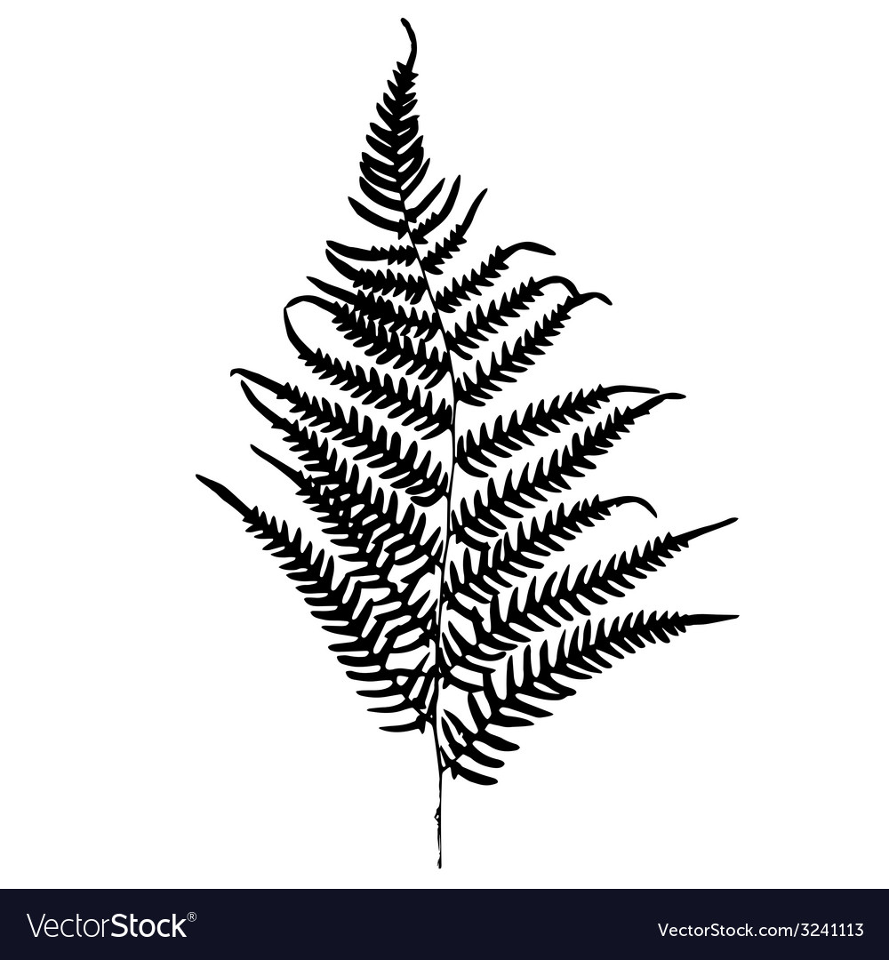 Fern silhouette isolated on white background vector | Price: 1 Credit (USD $1)
