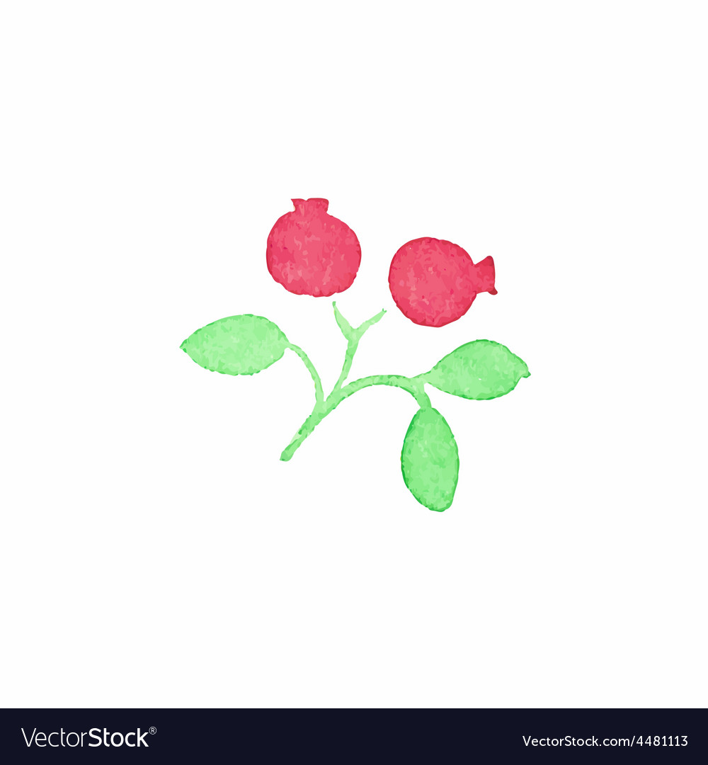 Watercolor cranberry on the white background vector | Price: 1 Credit (USD $1)