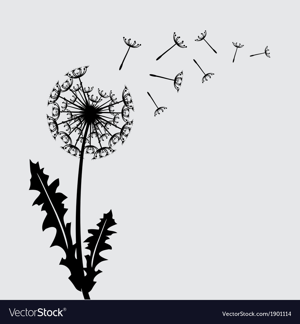 Blow dandelion background vector | Price: 1 Credit (USD $1)