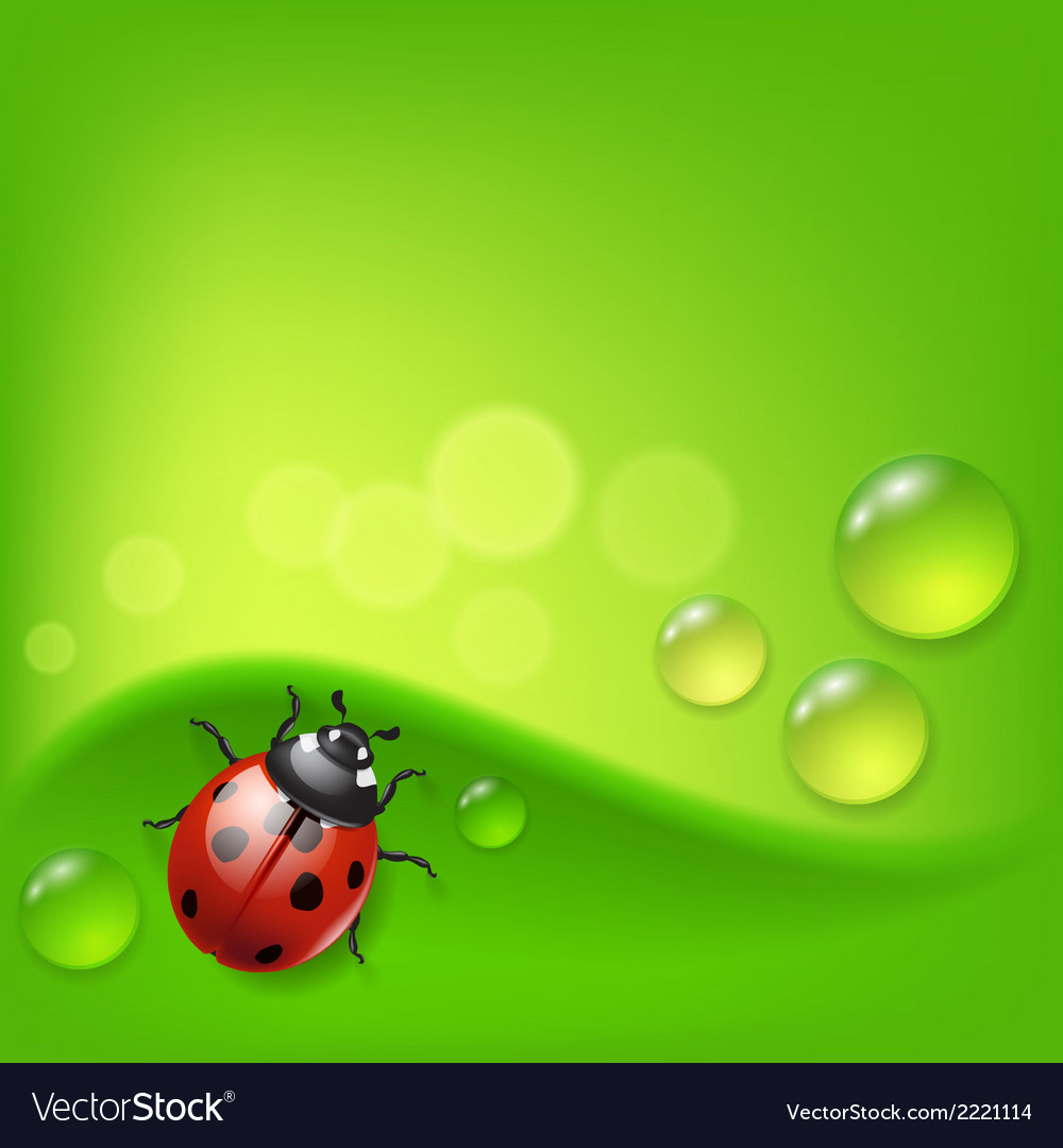 Green background with ladybird and dew vector | Price: 1 Credit (USD $1)