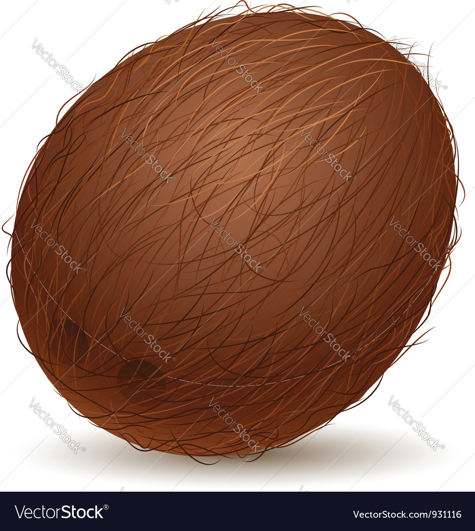 Realistic coconut vector | Price: 1 Credit (USD $1)