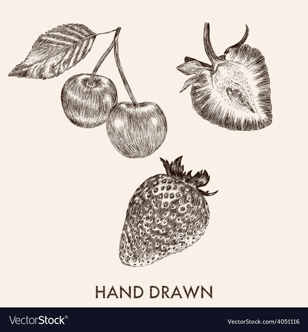 Sketch strawberry and cherry hand drawn fruit vector | Price: 1 Credit (USD $1)