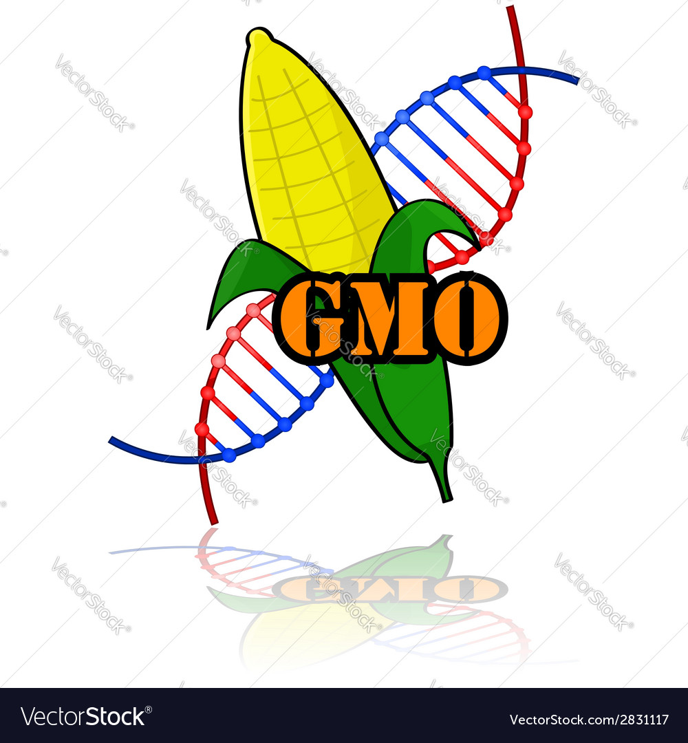 Genetically modified corn vector | Price: 1 Credit (USD $1)