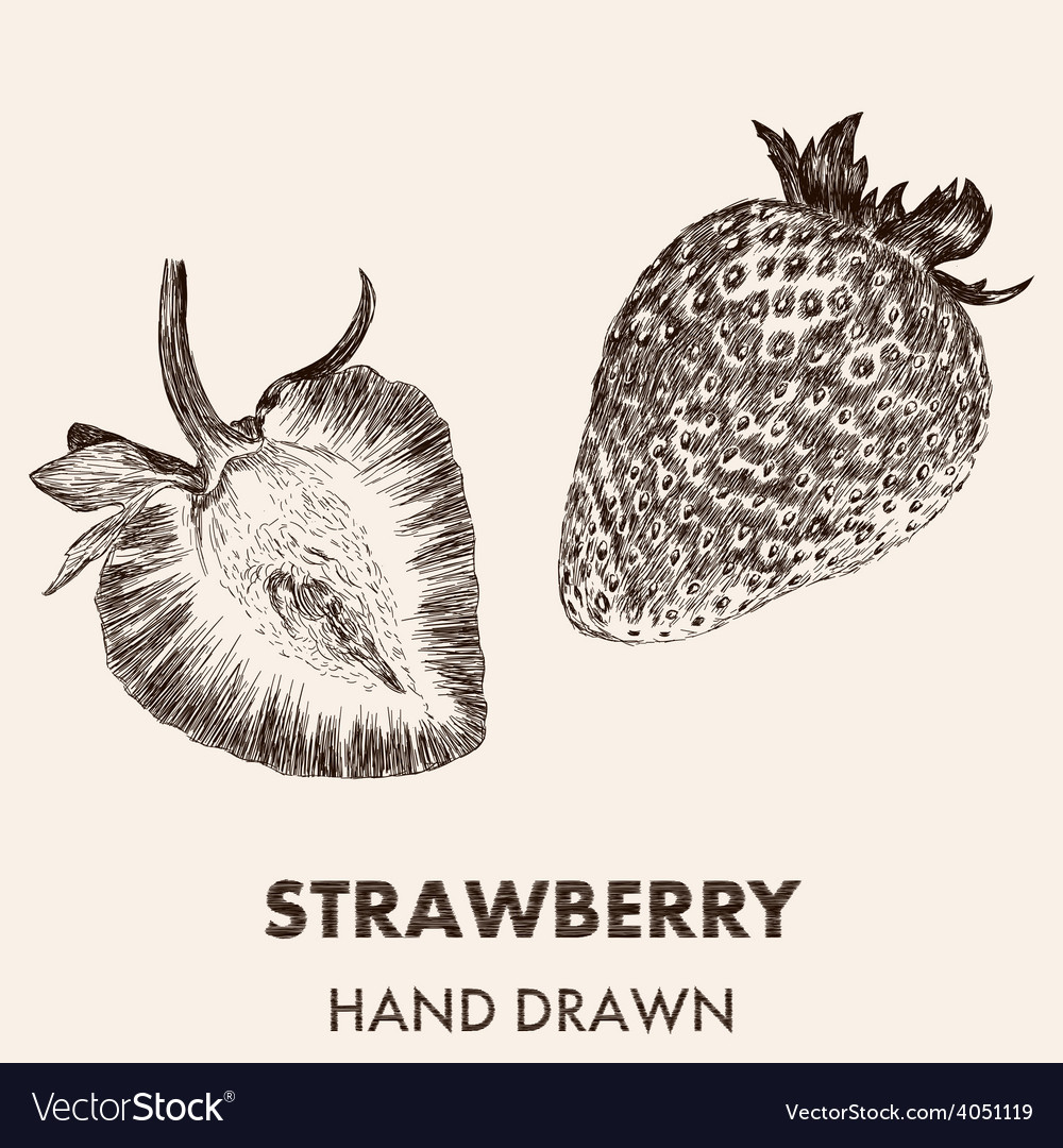 Sketch strawberry hand drawn fruit collection vector | Price: 1 Credit (USD $1)