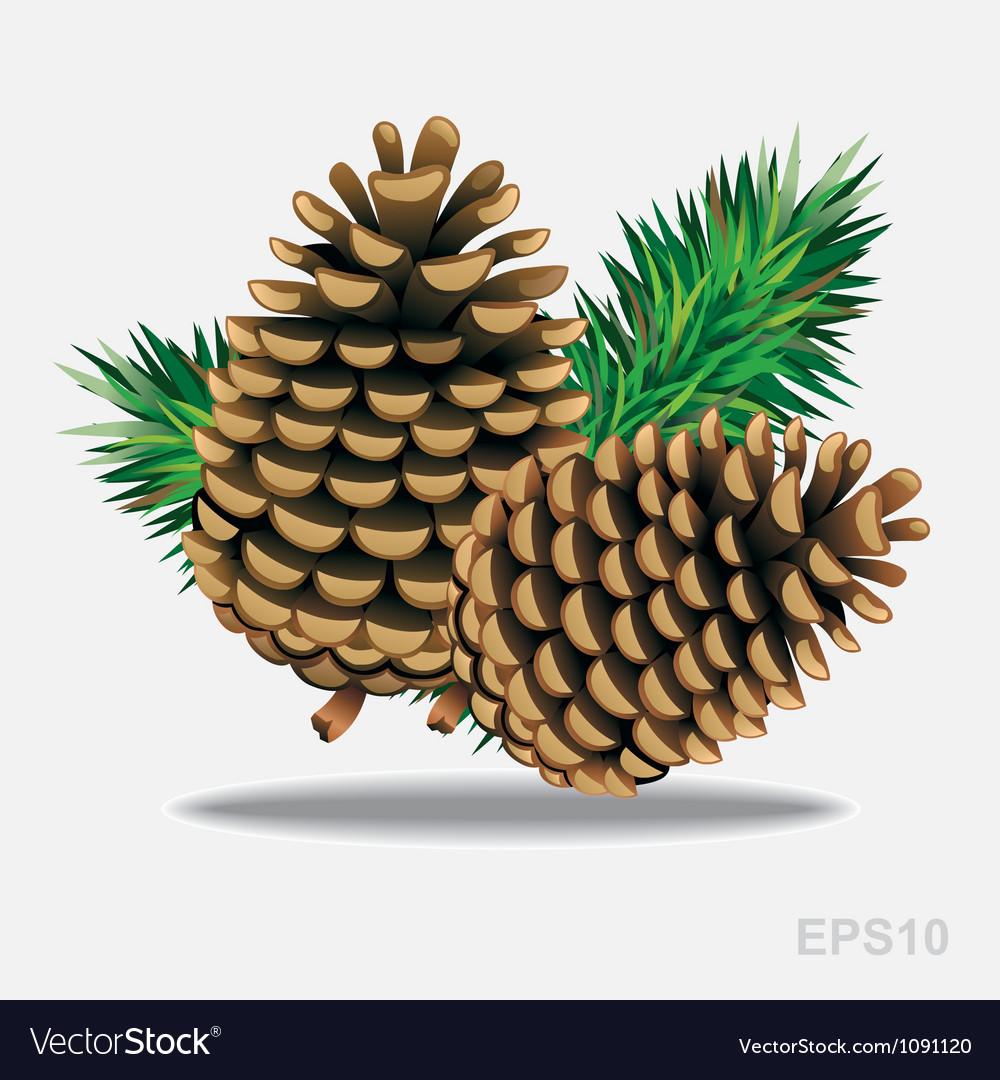 Pine cones with pine needles vector