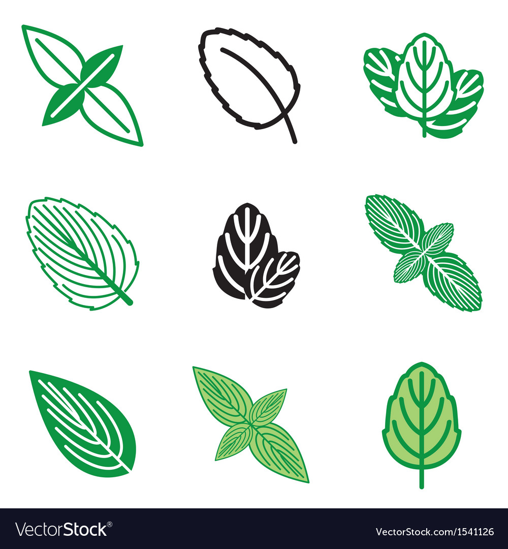 Logo icons mint vector | Price: 1 Credit (USD $1)