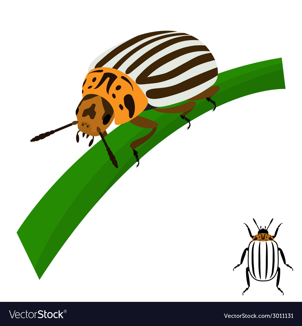 Colorado potato beetle sits on a stalk vector | Price: 1 Credit (USD $1)