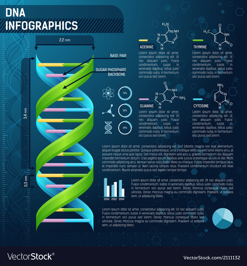 Dna for science infographics vector | Price: 1 Credit (USD $1)