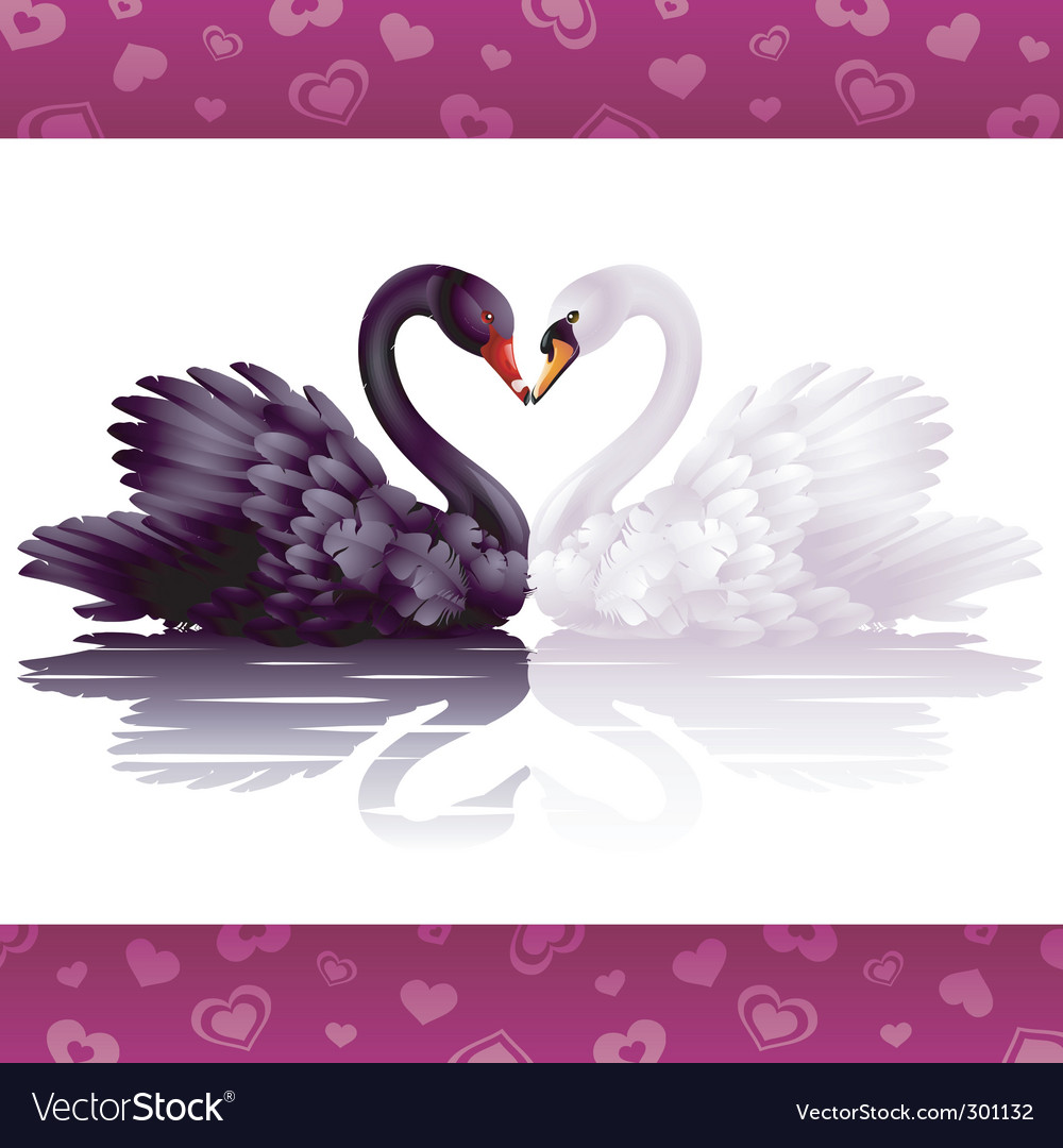 Two graceful swans in love vector | Price: 3 Credit (USD $3)
