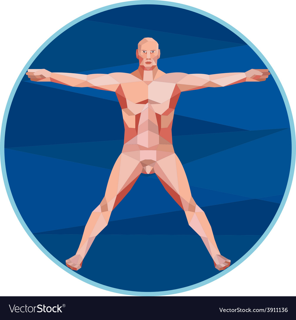 Da vinci man anatomy low polygon vector | Price: 1 Credit (USD $1)