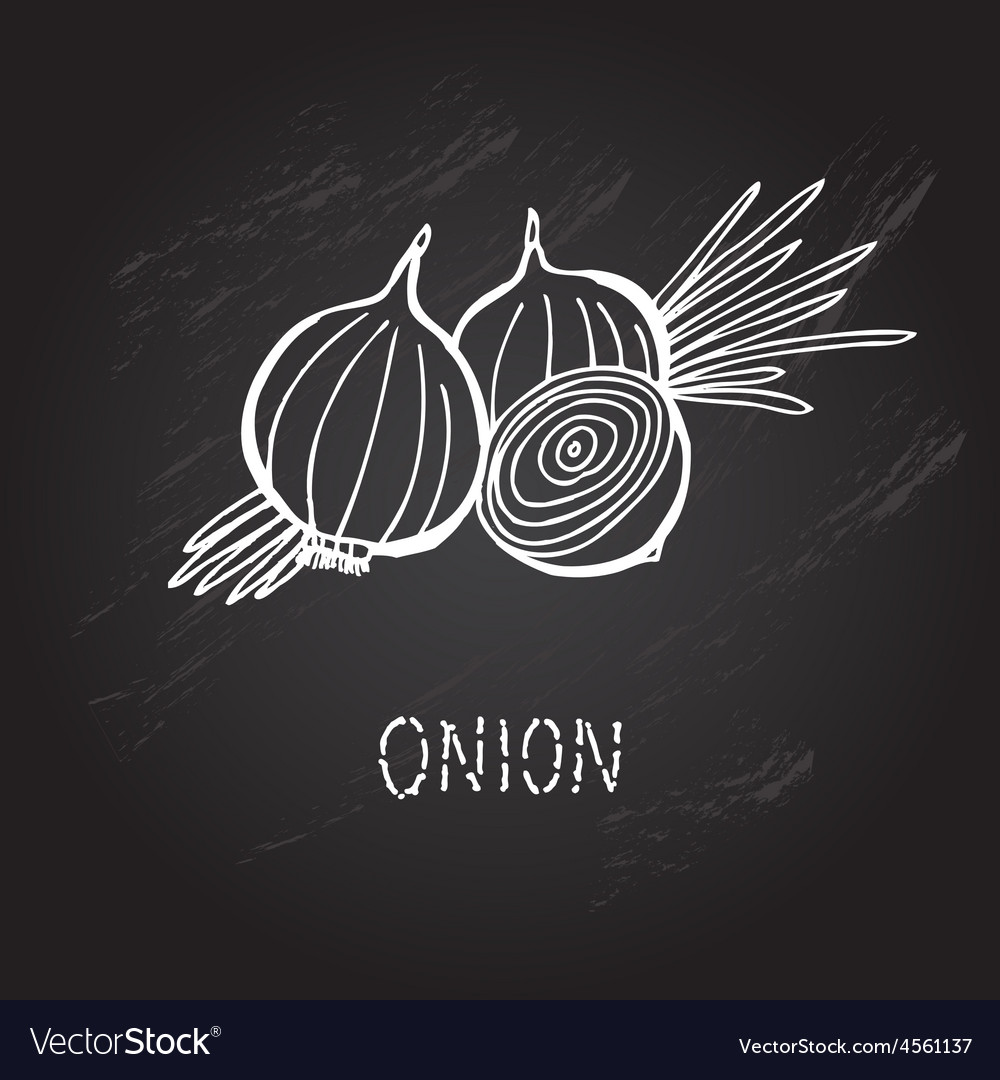 Hand drawn onion vector | Price: 1 Credit (USD $1)