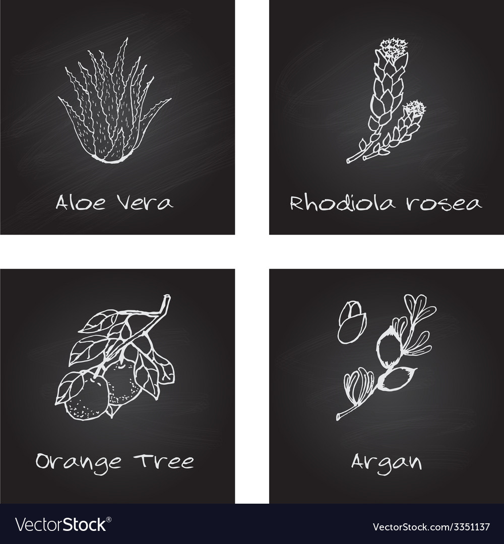 Handdrawn - health and nature set vector | Price: 1 Credit (USD $1)