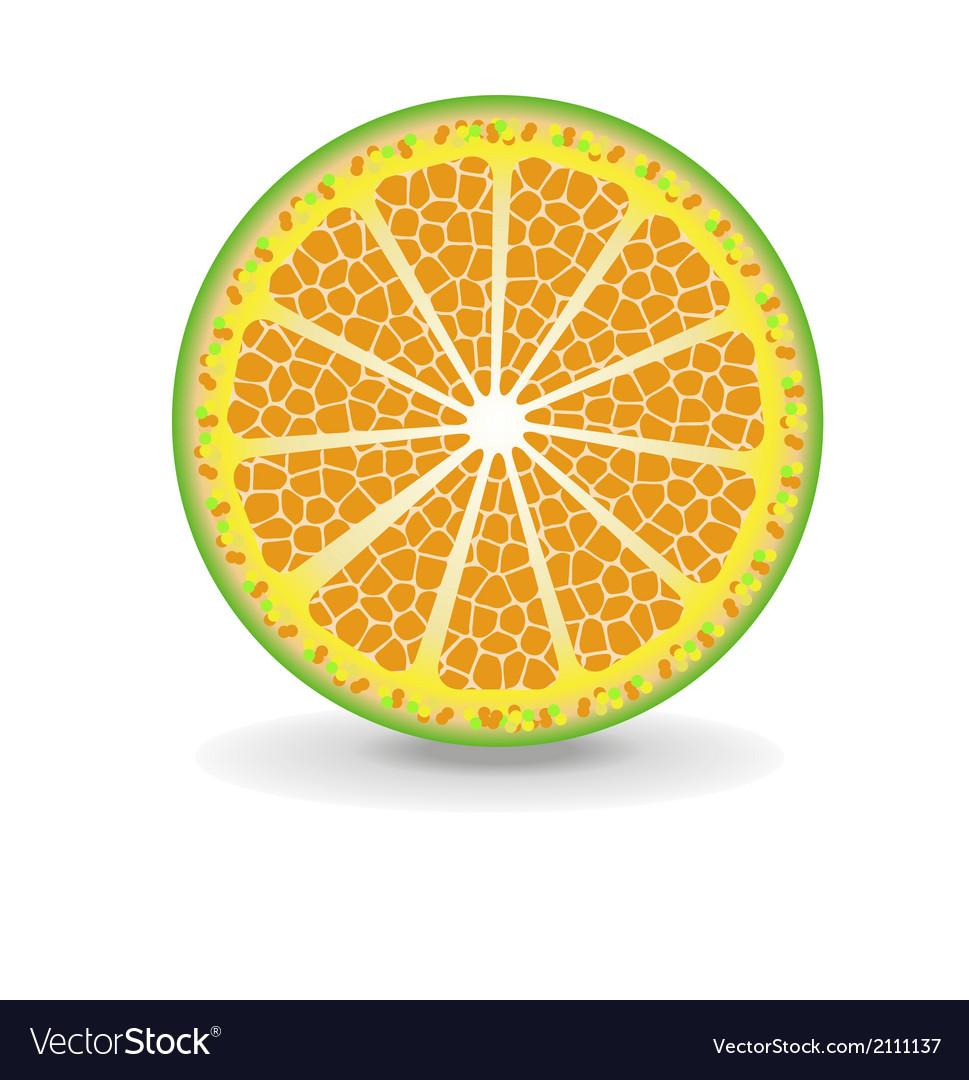 Orange fruits vector   Price: 1 Credit (USD $1)