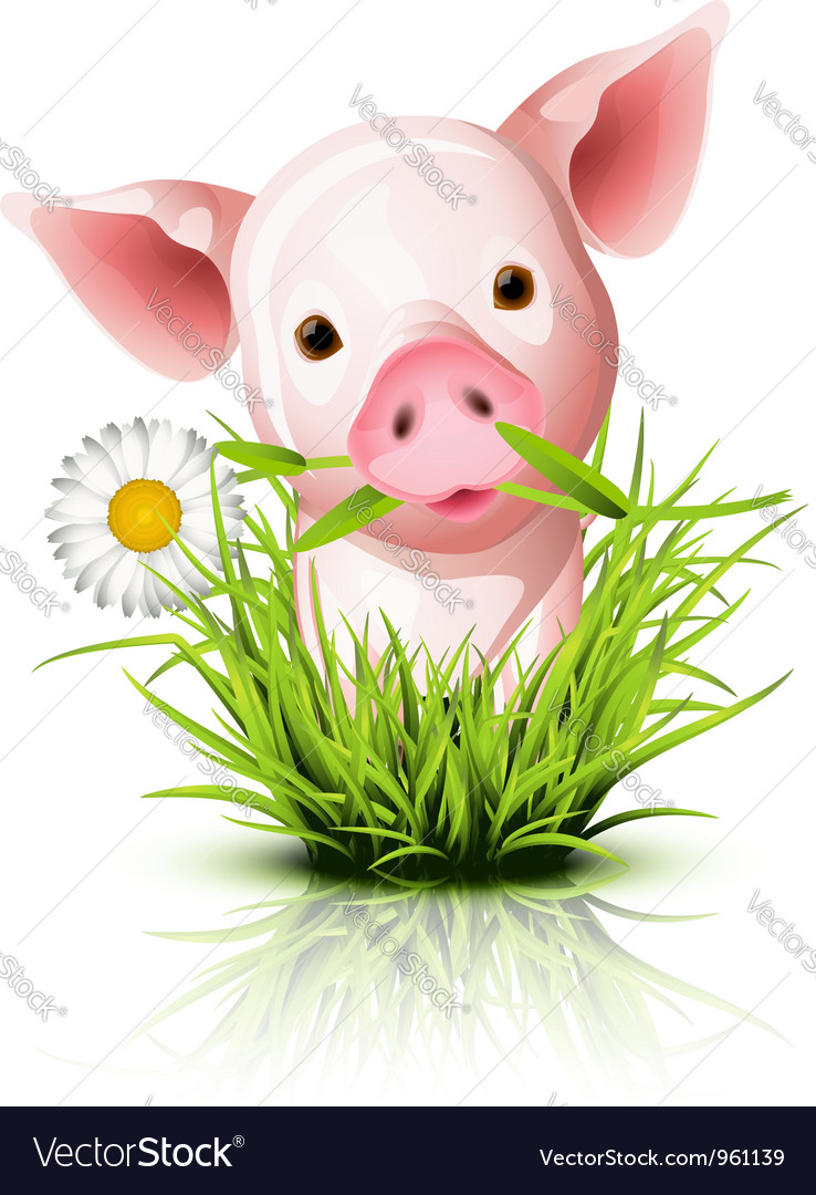 Little pig grass vector | Price: 3 Credit (USD $3)