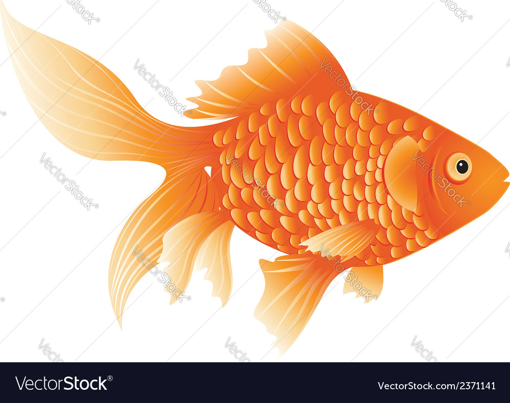 Gold fish vector | Price: 1 Credit (USD $1)