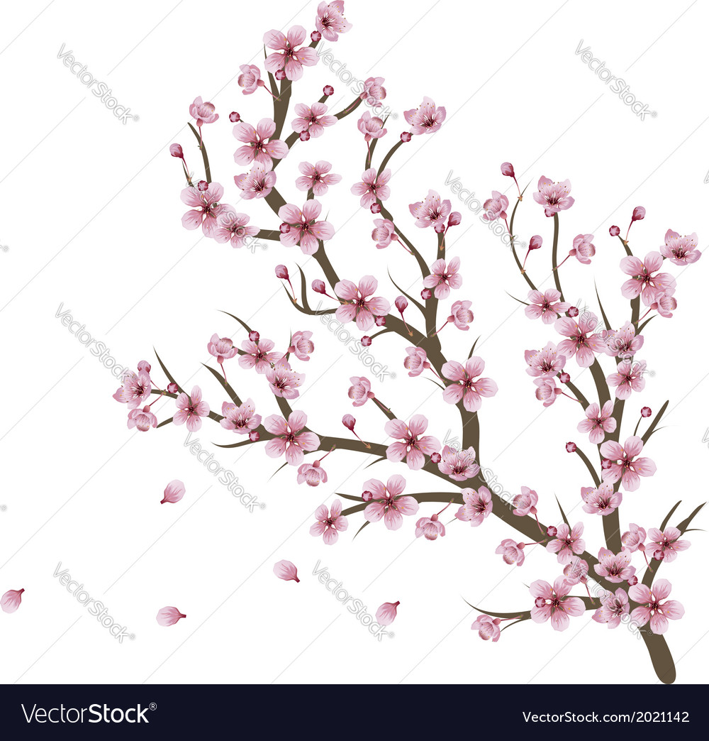 Cherry blossom branch vector | Price: 1 Credit (USD $1)