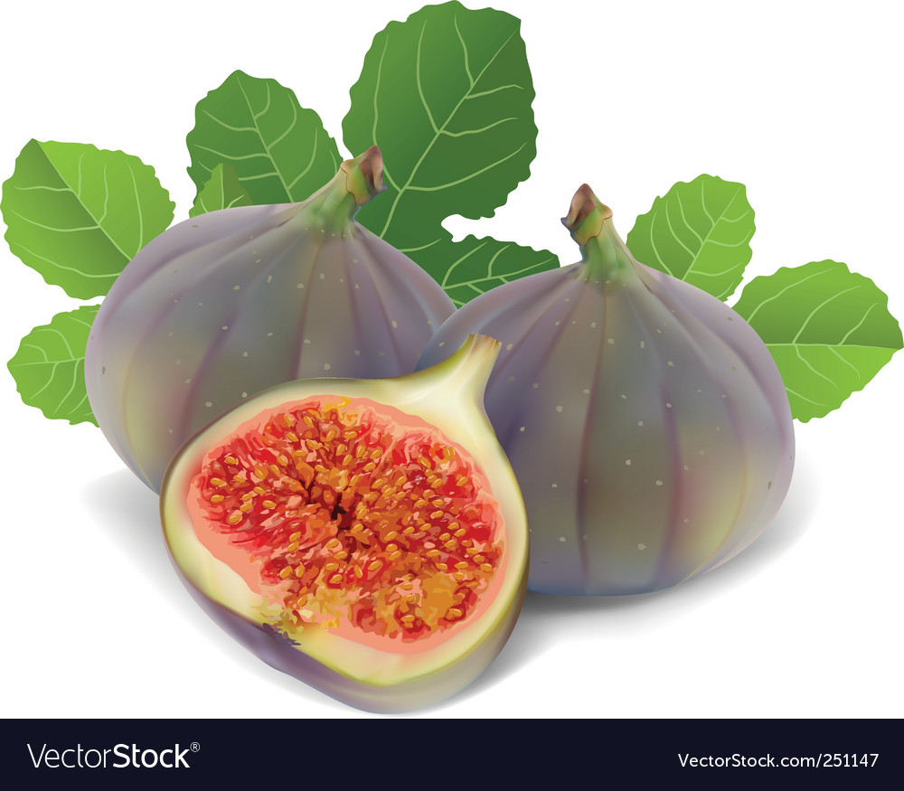 Fresh figs vector | Price: 1 Credit (USD $1)