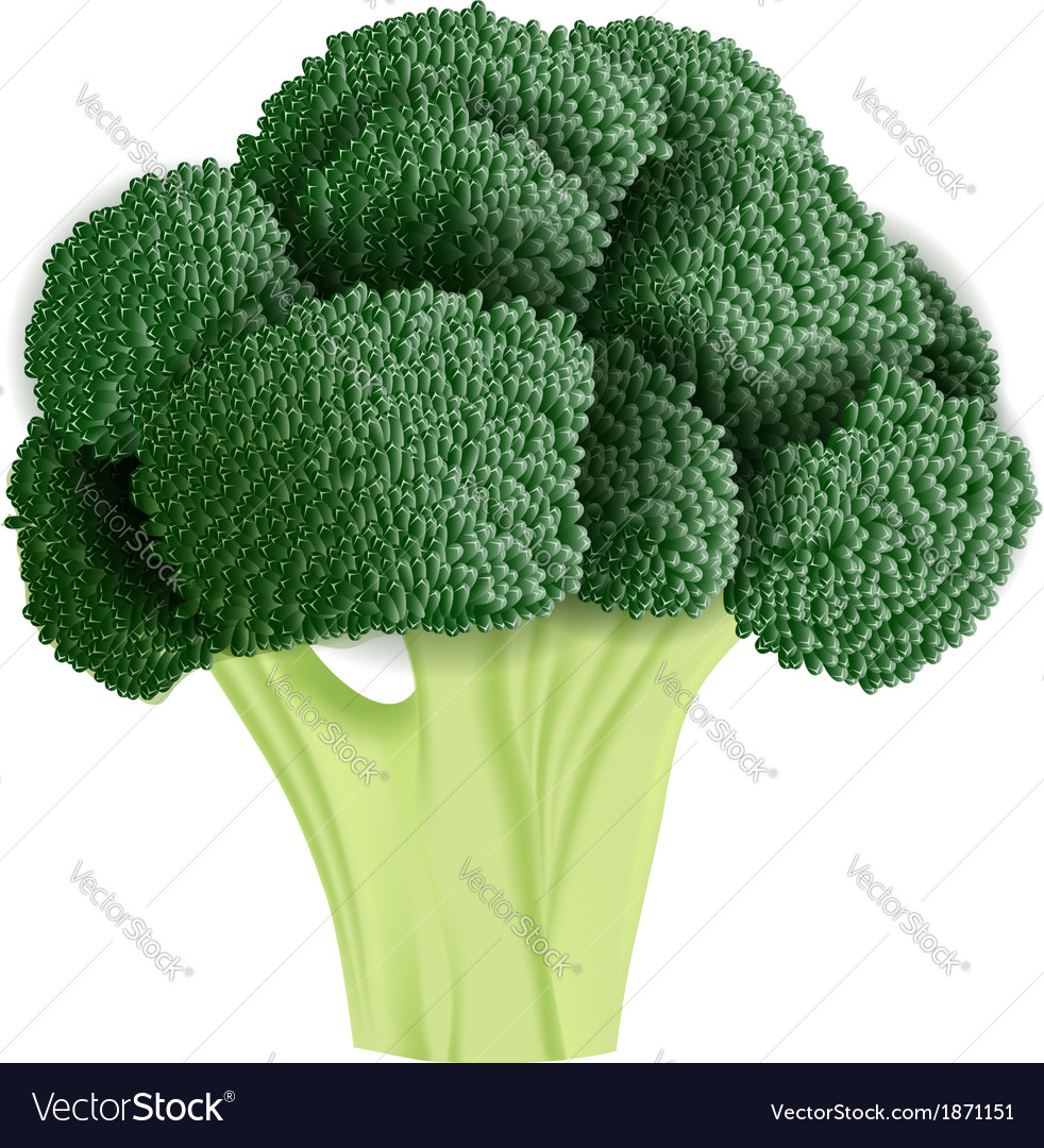 Realistic broccoli vector | Price: 1 Credit (USD $1)