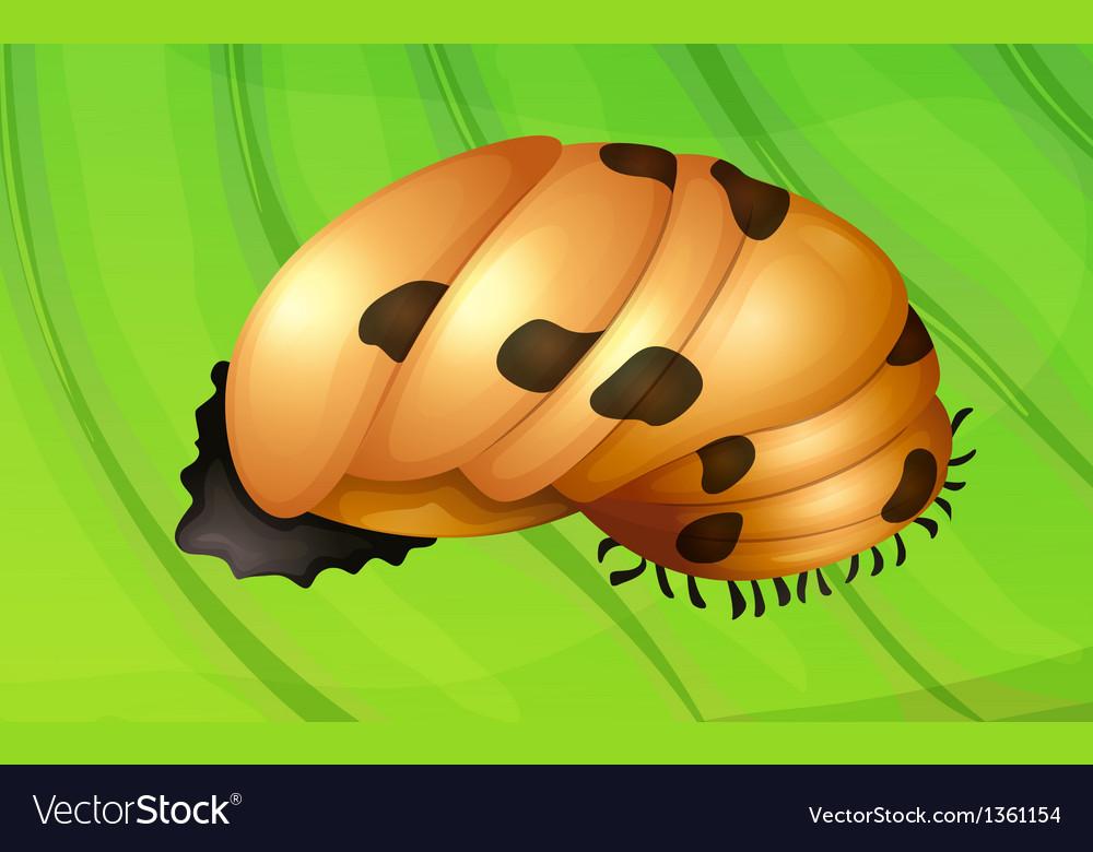 Ladybug life cycle vector | Price: 1 Credit (USD $1)