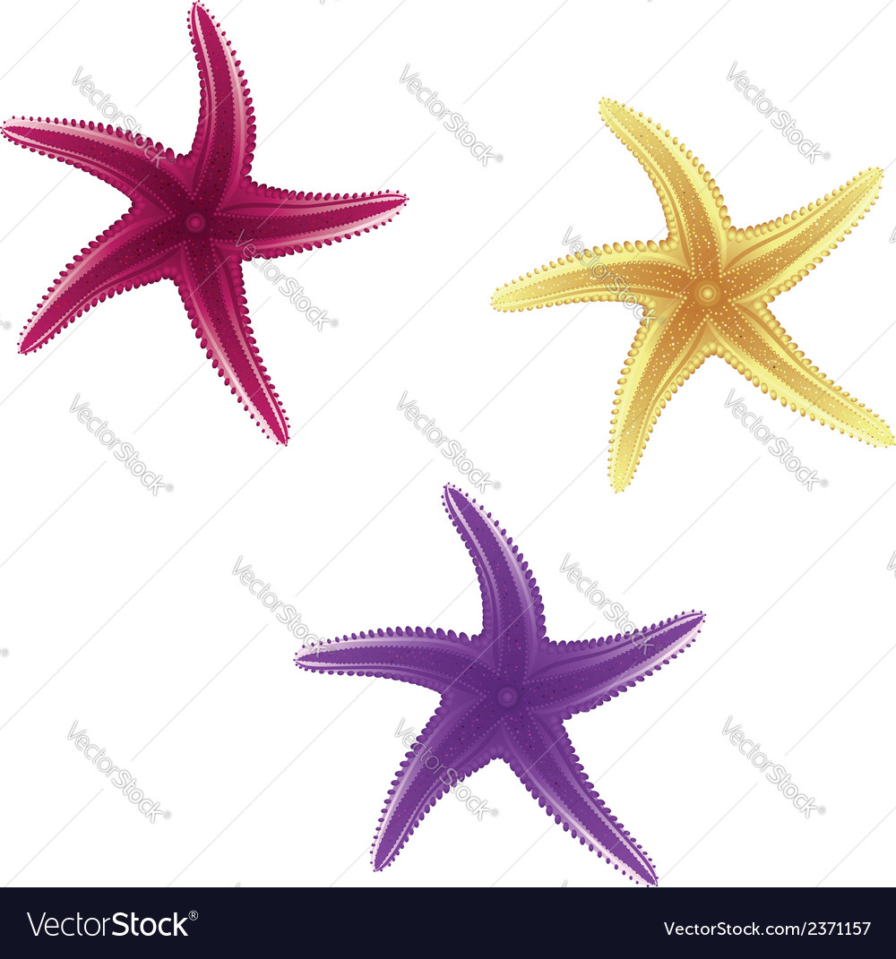 Starfishes vector | Price: 1 Credit (USD $1)