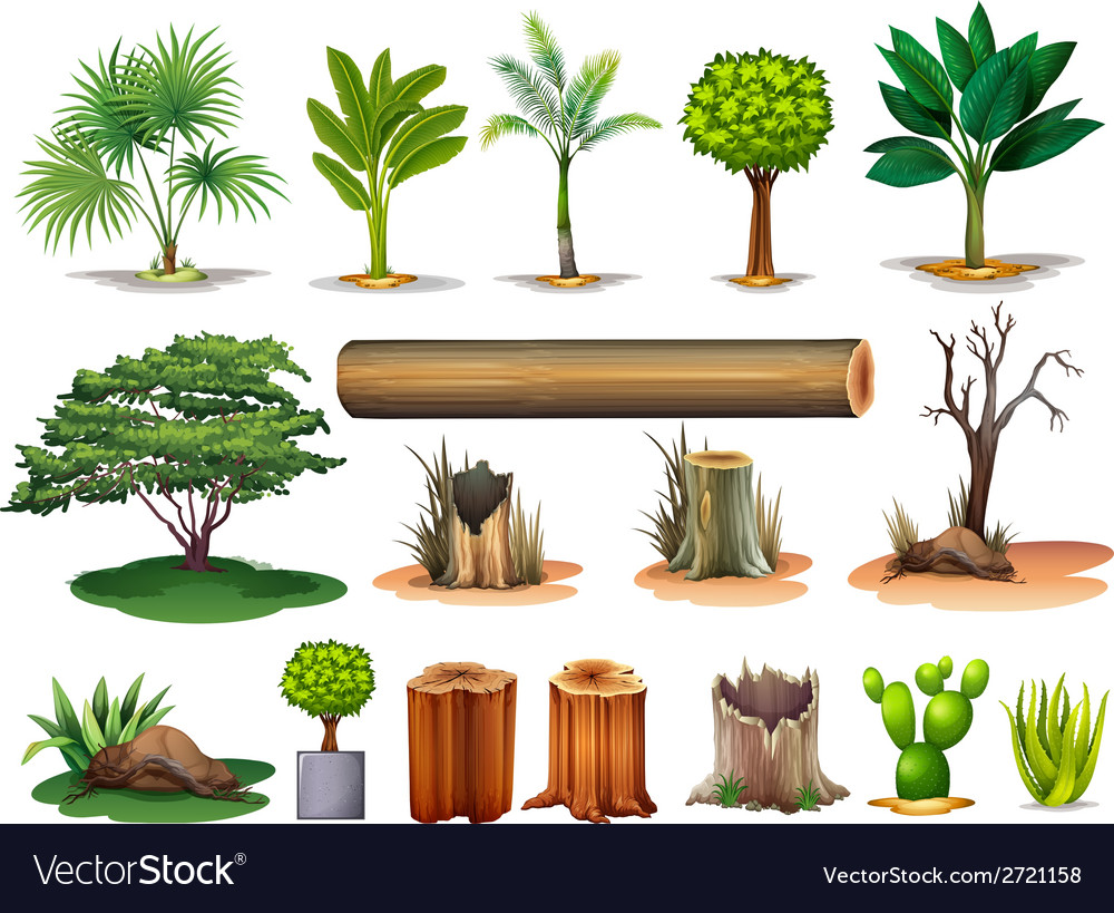 Trees and stumps vector | Price: 1 Credit (USD $1)