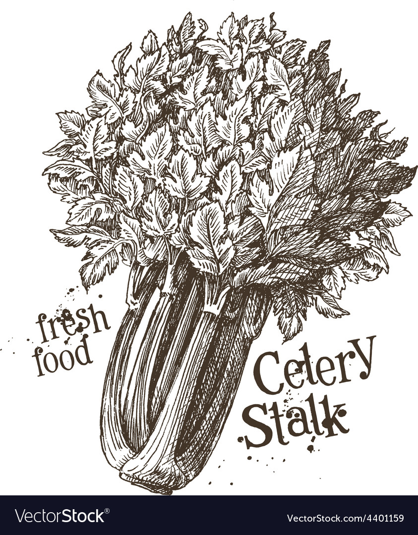 Celery stalk logo design template fresh vector | Price: 3 Credit (USD $3)