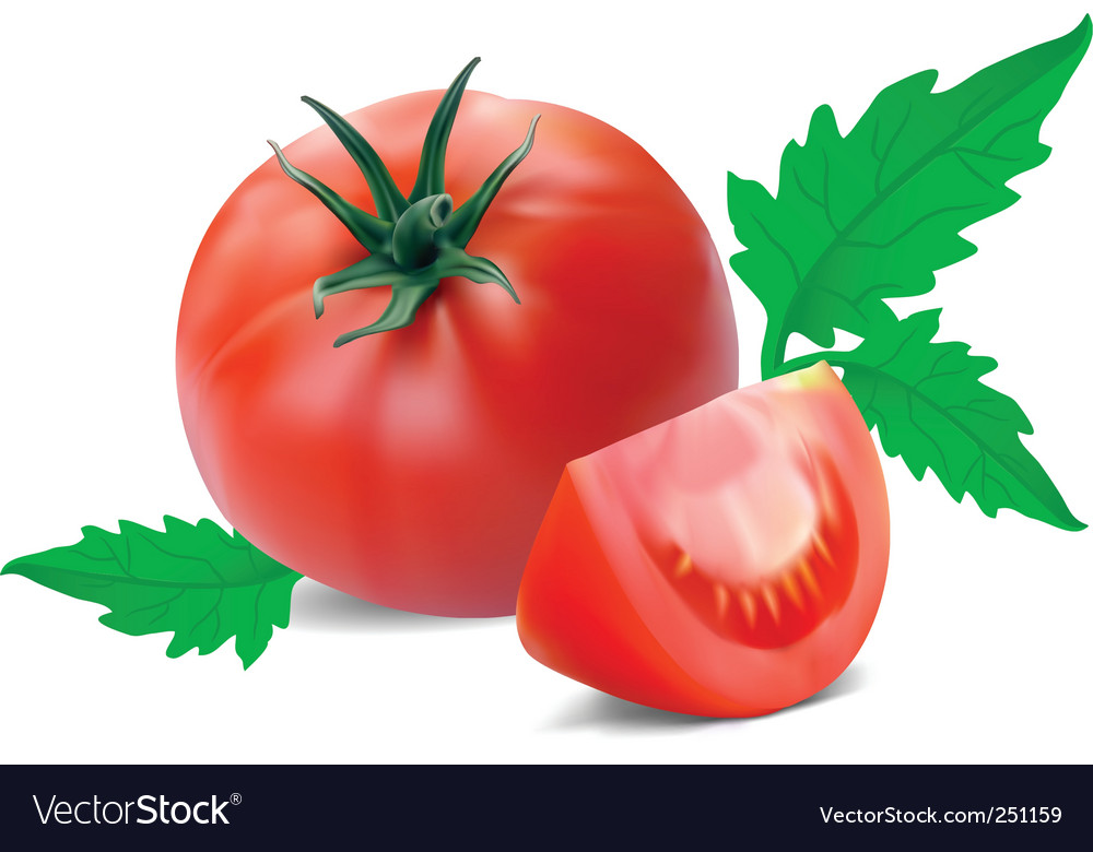 Tomato with segment vector | Price: 1 Credit (USD $1)